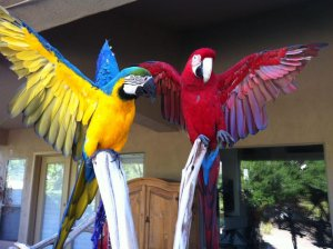Green Wing Macaw Hand Tame For Sale In Cheap Price